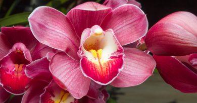 Orchidee als Symbolbild Yoni-Massage