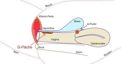 Grafik vom G-Punkt in der Vagina