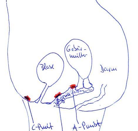 Zeichnung der Lage von A-Punkt und G-Punkt in der Vagina